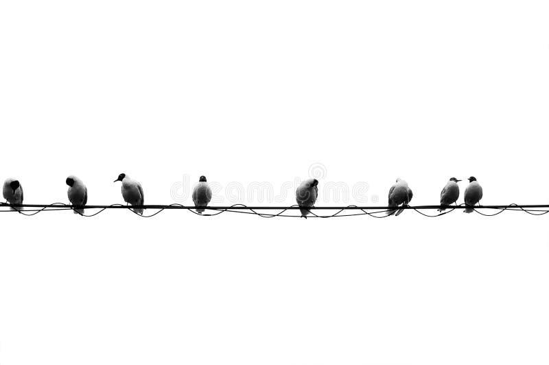 Oito pássaros em um fio imagem de stock