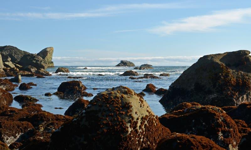 Ojämn Oregon kustlinje arkivfoton