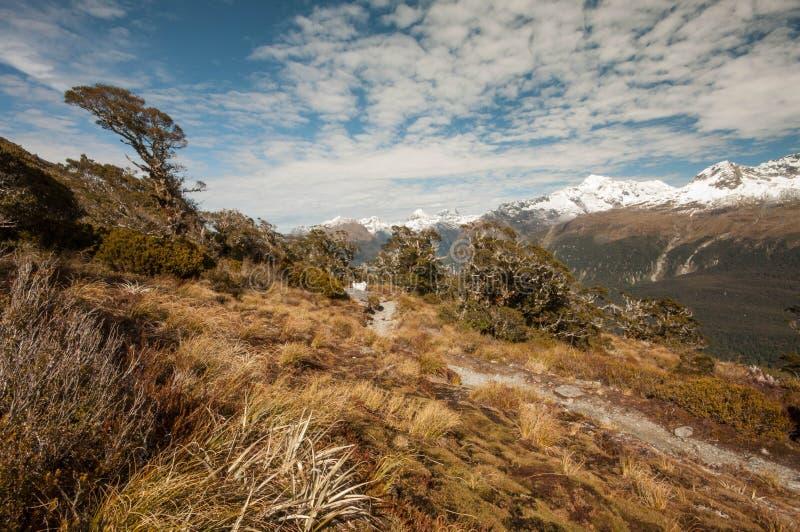 Ojämna Darran Mountains från det Routeburn spåret royaltyfria foton