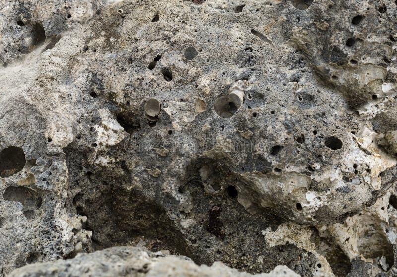Ojämna red ut stengrå färger med högg ut kraterhål bevattnar havsbakgrundsgeologi royaltyfri foto