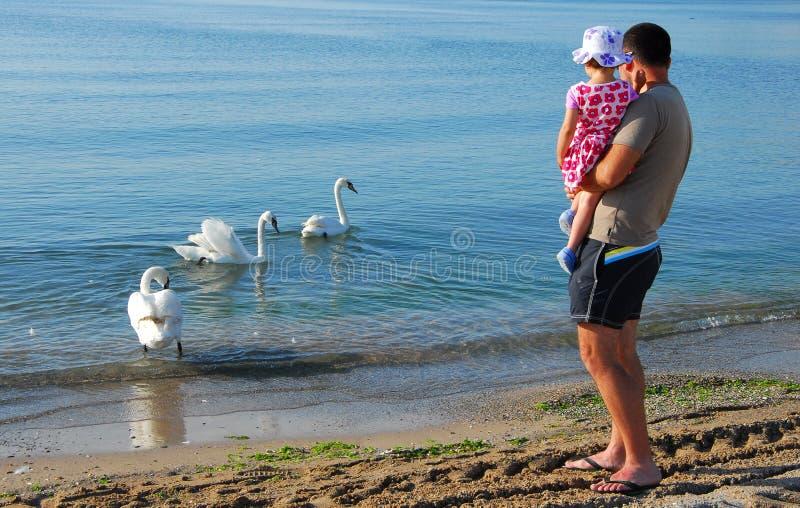 Ojciec i córka patrzeje łabędź zdjęcia royalty free