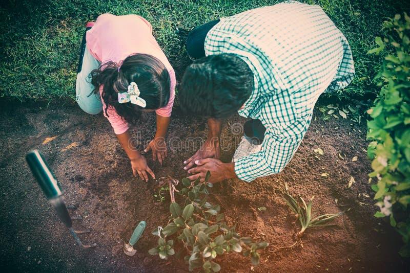 Ojciec i córka zasadza drzewa w ogródzie przy podwórkem zdjęcie royalty free