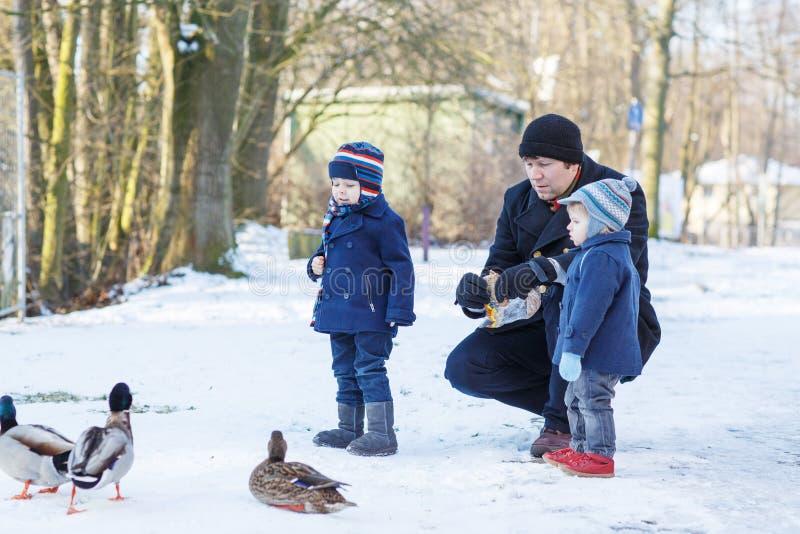 Ojcuje i dwa małej rodzeństwo chłopiec karmi kaczki w zimie. obraz royalty free