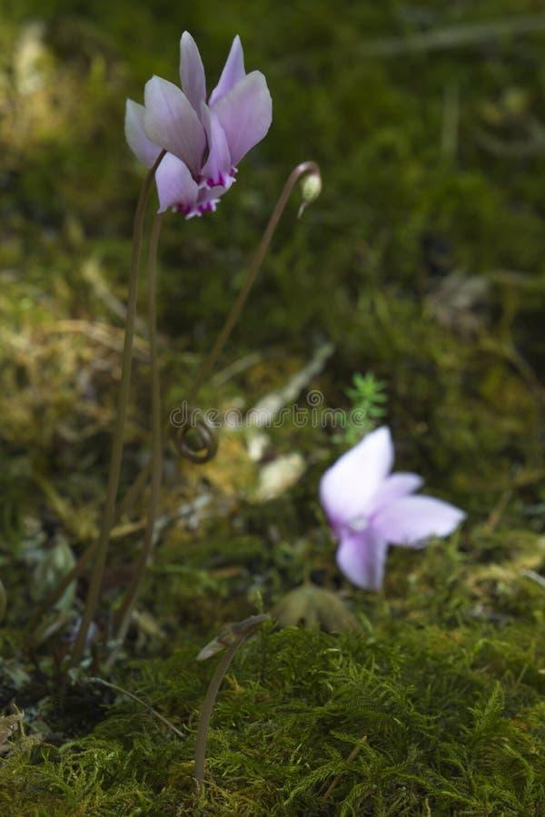Ojeada delicada y exquisita del natue en la isla de Vancouver fotografía de archivo libre de regalías