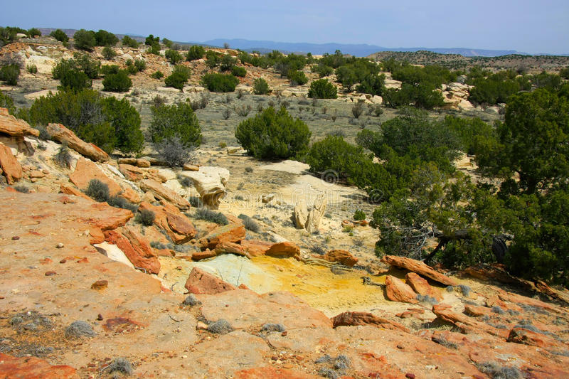 At the Ojito Wilderness Area, New Mexico. Yellow sandstone formations and green junipers in New Mexico wilderness stock photo