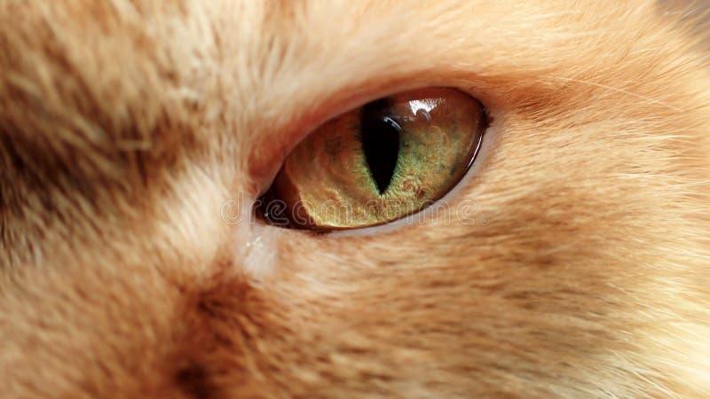 Ojo de color verde amarillo de un primer del gato del jengibre imagenes de archivo