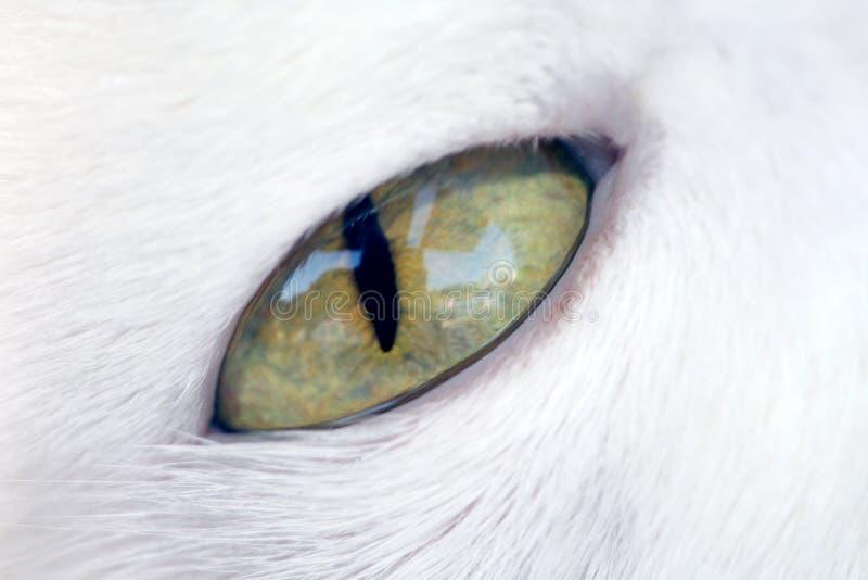 Ojo de gato fotografía de archivo