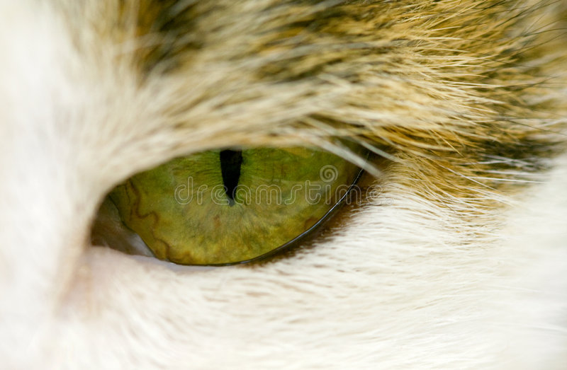 Ojo de gato foto de archivo libre de regalías