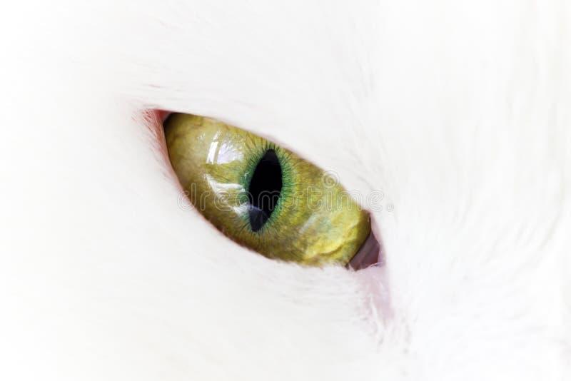 Ojo de gato amarillo verde imagen de archivo libre de regalías