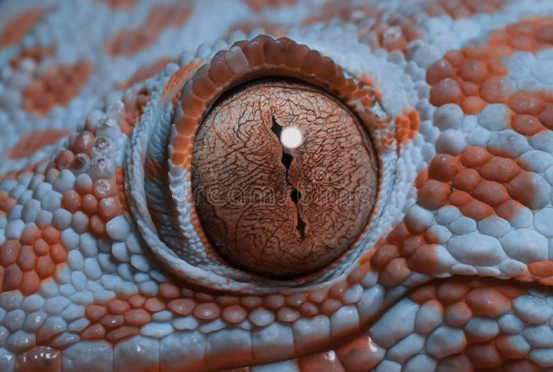 Ojo de la salamandra en macro imagen de archivo libre de regalías