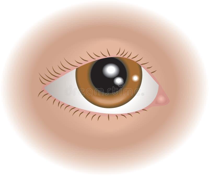 ojo de las partes del cuerpo 2418081