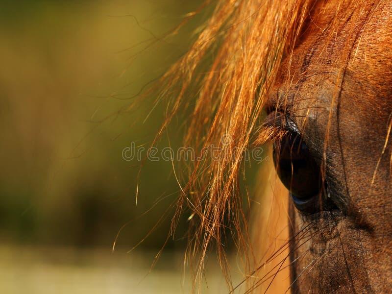 Ojo de los caballos fotos de archivo