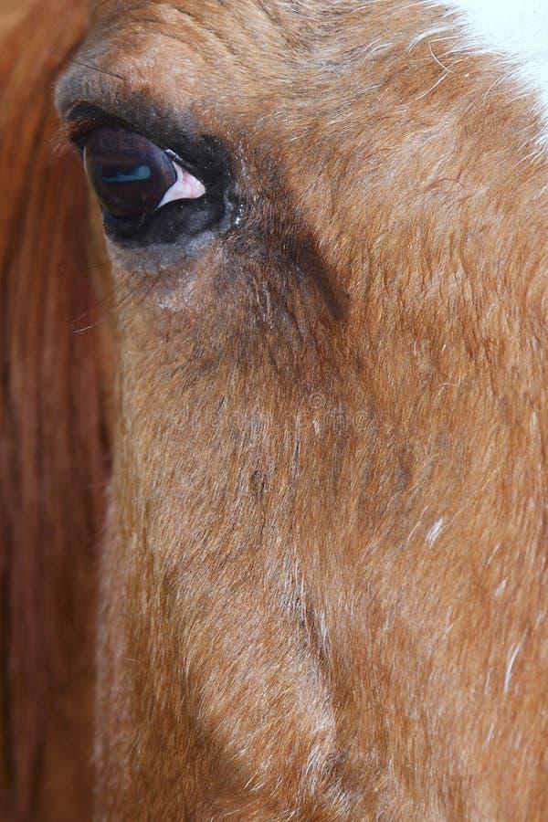 Ojo de los caballos imagen de archivo