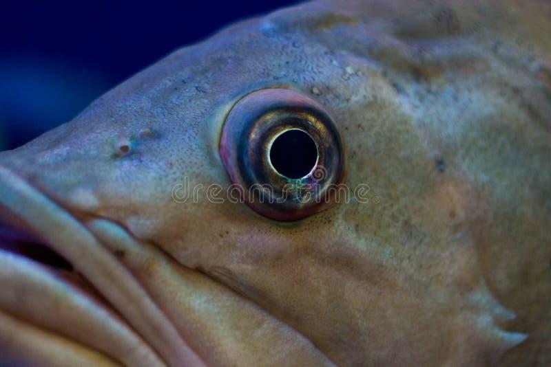 Ojo de pescados imágenes de archivo libres de regalías