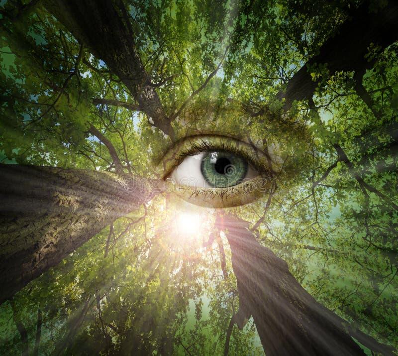 Ojo del bosque imagen de archivo