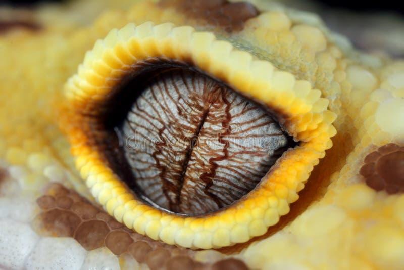 Ojo del gecko del leopardo imagen de archivo