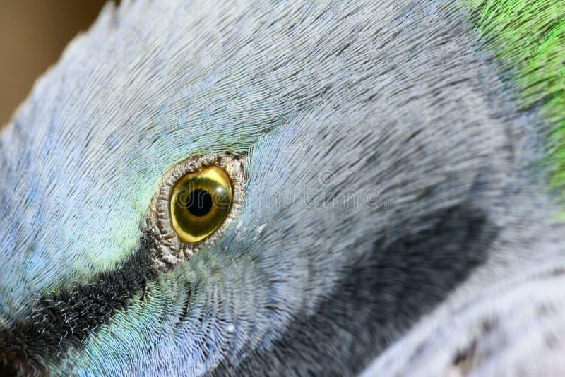 Ojo del pájaro imagen de archivo