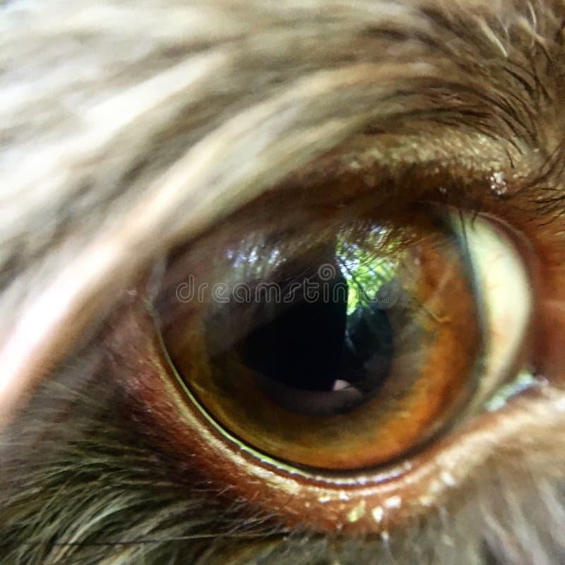 Ojo del perrito fotografía de archivo
