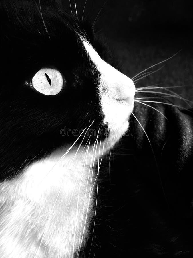 Ojo del tigre imagen de archivo libre de regalías