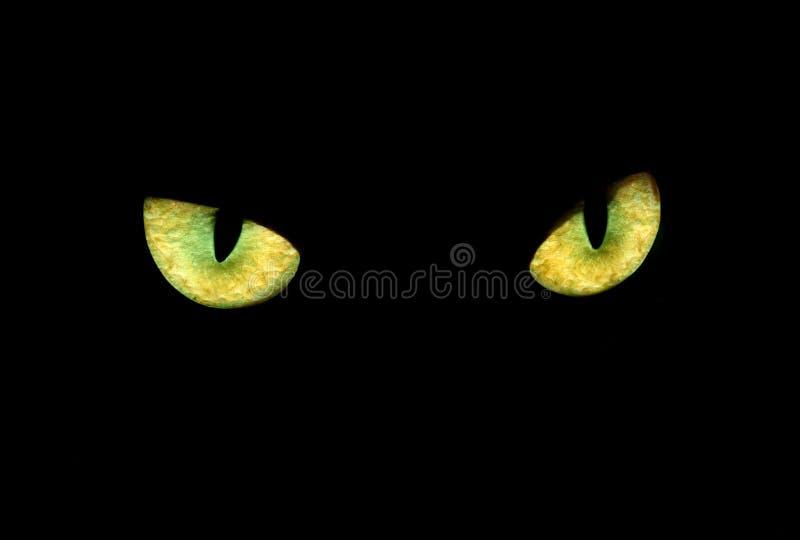 Ojo felino en la obscuridad imagen de archivo libre de regalías