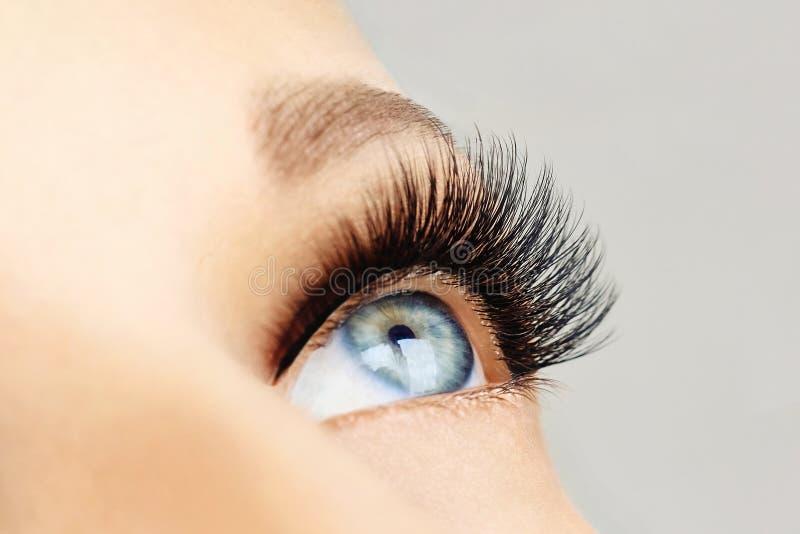 Ojo femenino con las pestañas falsas largas extremas y el trazador de líneas negro Extensiones de la pestaña, maquillaje, cosméti imagen de archivo