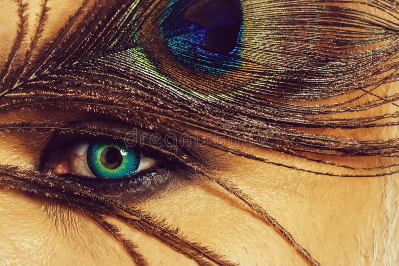 Ojo humano con la pluma del pavo real imagen de archivo