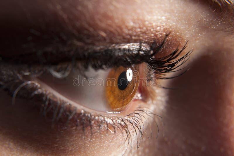 Ojo marrón del `s de la mujer que mira furtivamente en oscuridad imagen de archivo libre de regalías