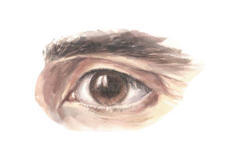 Ojo marrón masculino que anticipa con confianza, ejemplo libre illustration