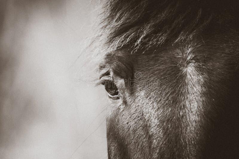 Ojo negro del caballo imagen de archivo libre de regalías