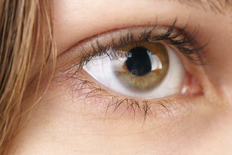 Ojo pardo femenino joven con la lente de contacto foto de archivo