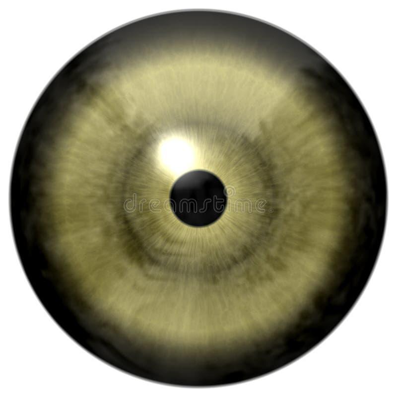Ojo verde gris con el fondo blanco, poco globo del ojo negro del alumno, humano y animal, gran visión, globo del ojo colorized imagen de archivo