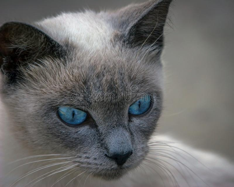 Ojos azules viejos imagenes de archivo