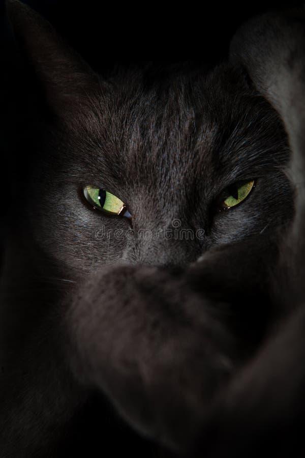 Ojos de gato fantasmagóricos del diablo imagenes de archivo