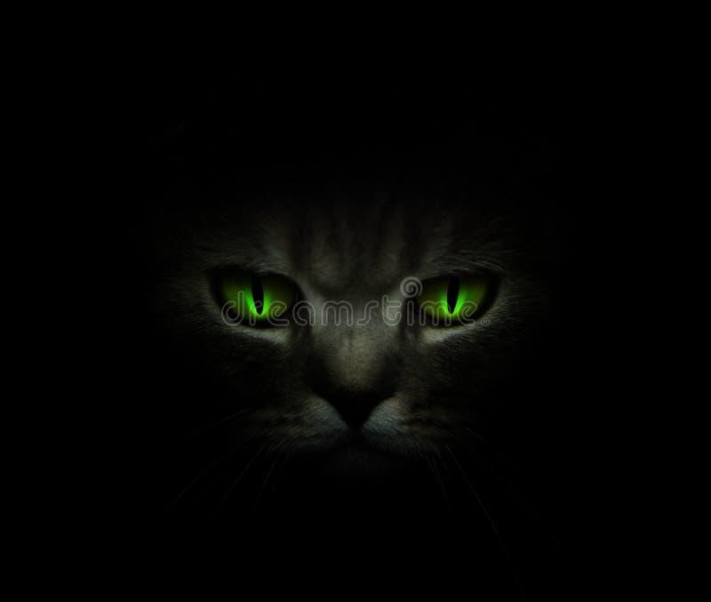 Ojos de gato verdes que brillan intensamente en la obscuridad fotografía de archivo