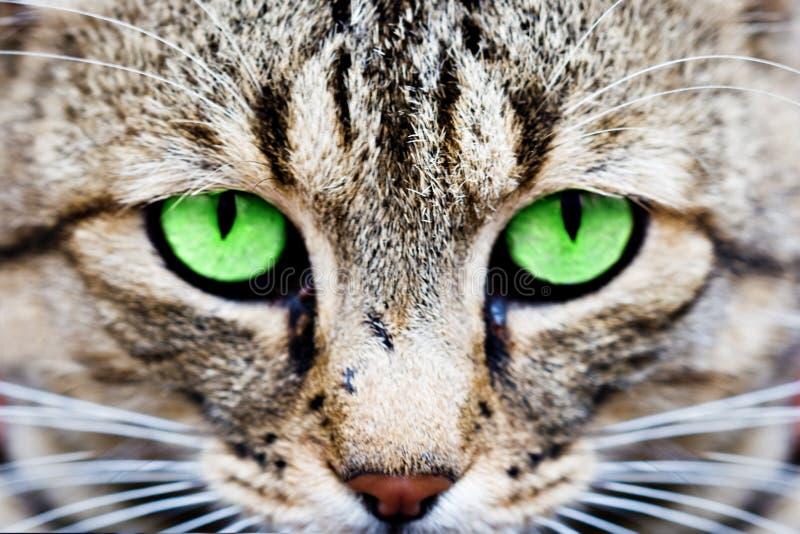 Ojos de gatos imágenes de archivo libres de regalías