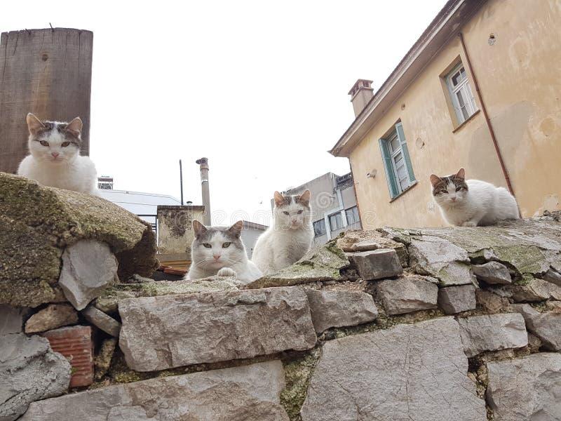 ojos de gatos pequeños muchos que miran de piedra foto de archivo libre de regalías