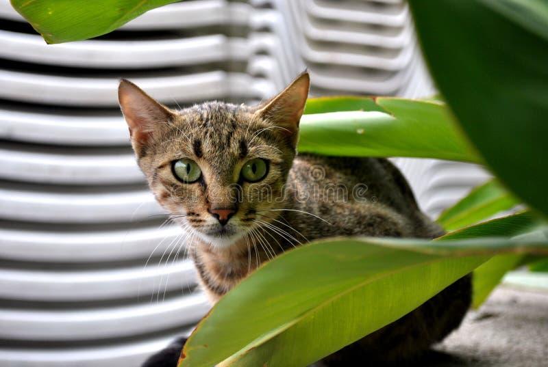 Ojos de gatos verdes imagenes de archivo