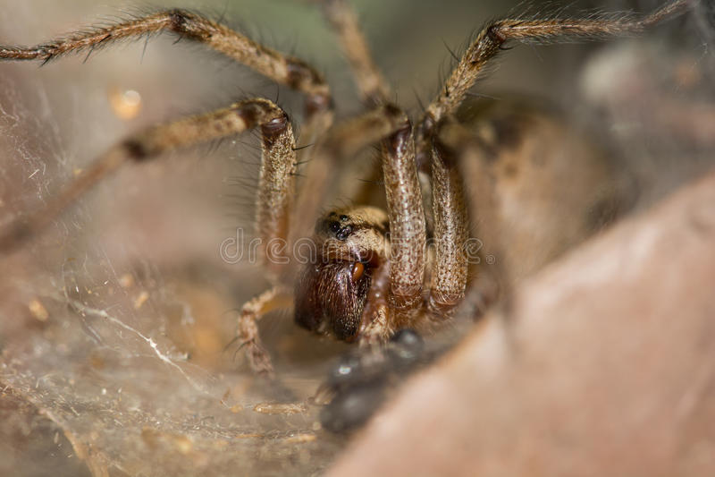 Ojos de la araña imagen de archivo libre de regalías