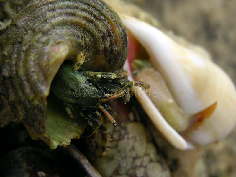 Ojos del shell fotografía de archivo