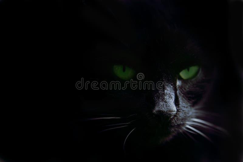 Ojos en la obscuridad fotos de archivo