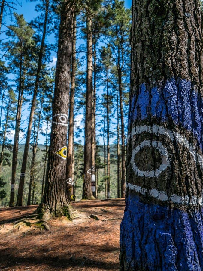 Ojos en los árboles, bosque de Oma fotografía de archivo