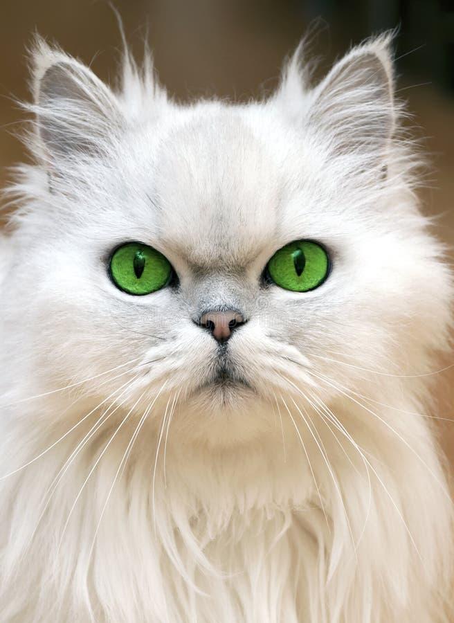 Ojos verdes imagen de archivo libre de regalías