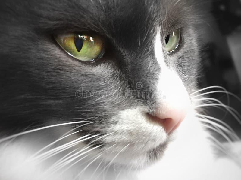 Ojos verdes 1 fotos de archivo libres de regalías
