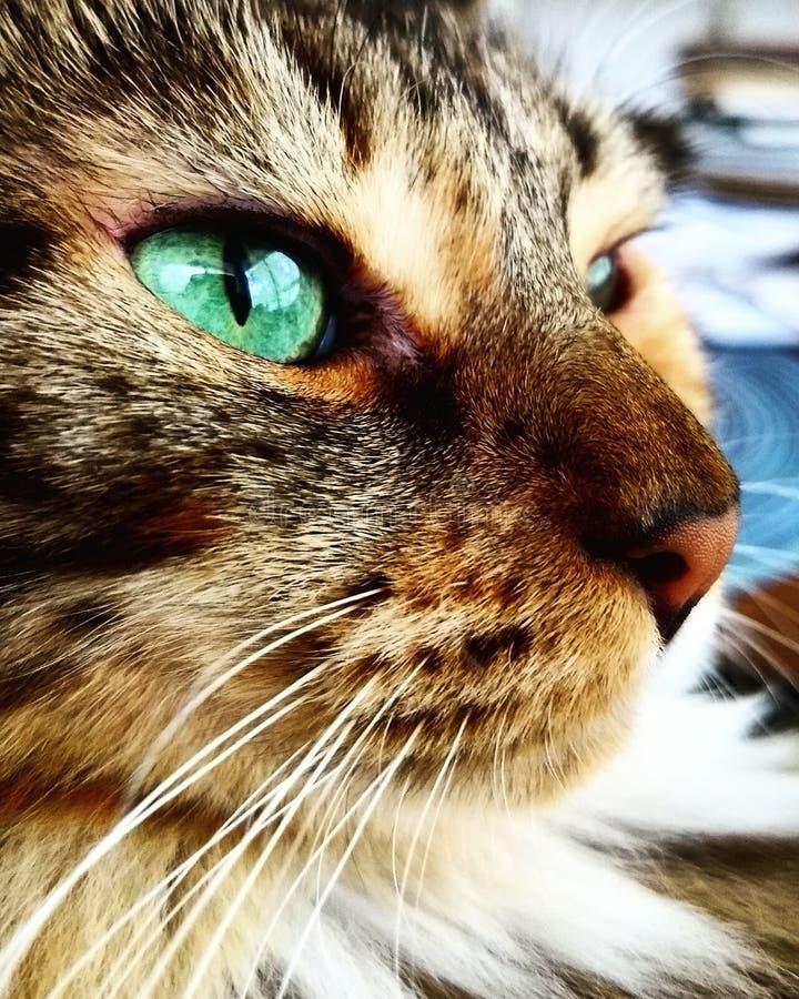 Ojos verdes fotografía de archivo libre de regalías