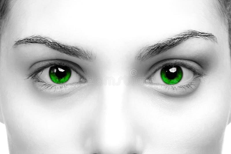 Ojos verdes foto de archivo libre de regalías