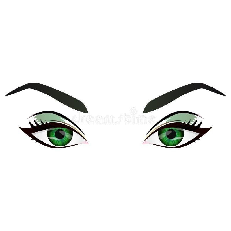 Ojos verdes femeninos y cejas del vector realista de la historieta libre illustration