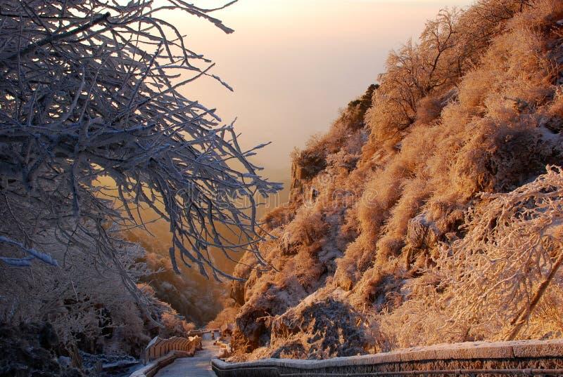 okładkowy sosny śniegu wschód słońca fotografia royalty free