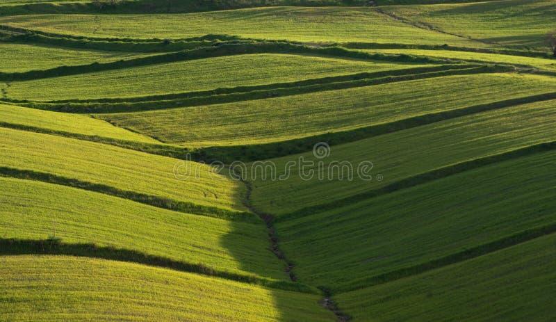okładkowy trawy wzgórzy bujny kołysanie się fotografia stock