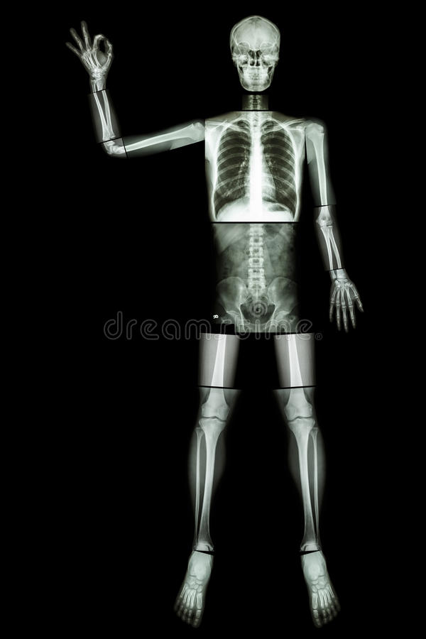OK skeleton (Human bone raise the hand and OK sign) (Whole body : head neck spine shoulder arm elbow forearm wrist hand finger tho. Rax heart lung back abdomen stock images