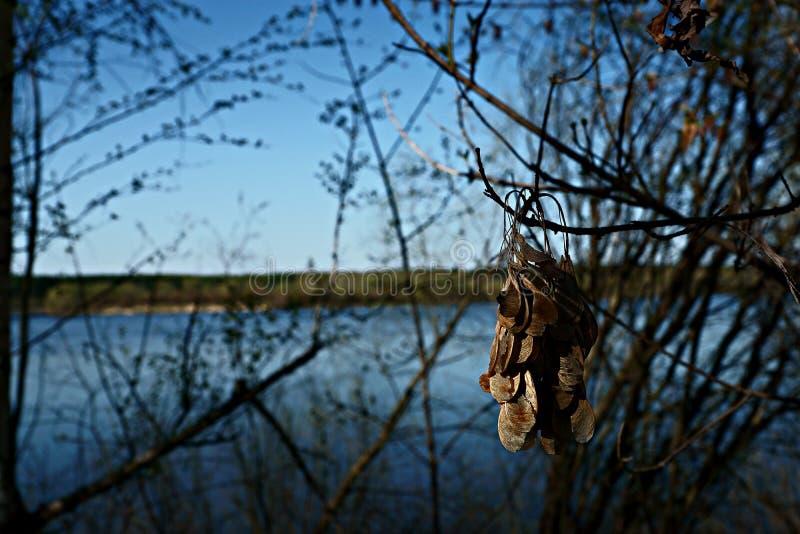 Oka-Fluss, Zhdanov-Stauwasser lizenzfreies stockbild